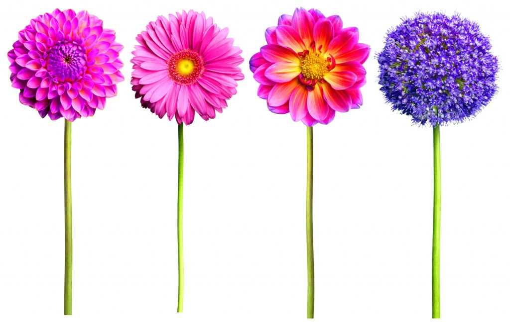 WF-Pink-and-Purple-Flower-4-packs-copy